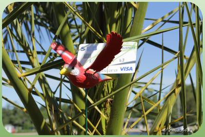 kreditkort som sitter fast i ett träd